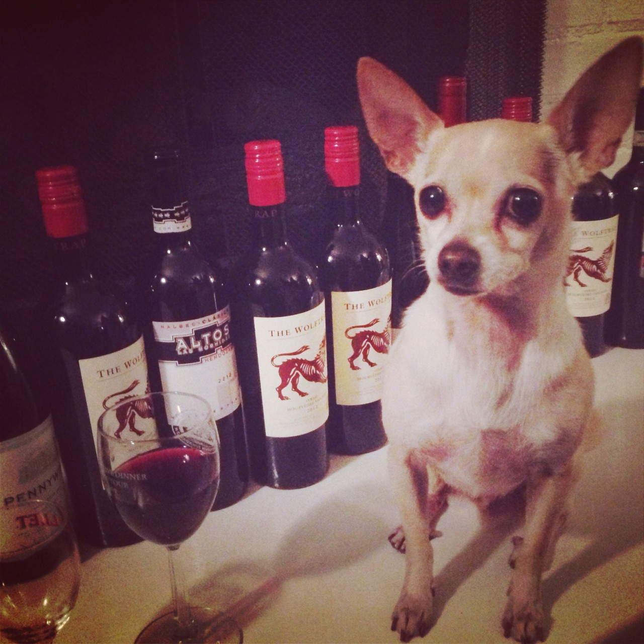 Drink Wine, Save Puppies!